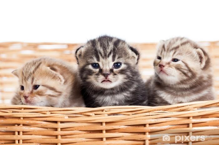 fotky malé kočičkyredtube chlupatá kunda