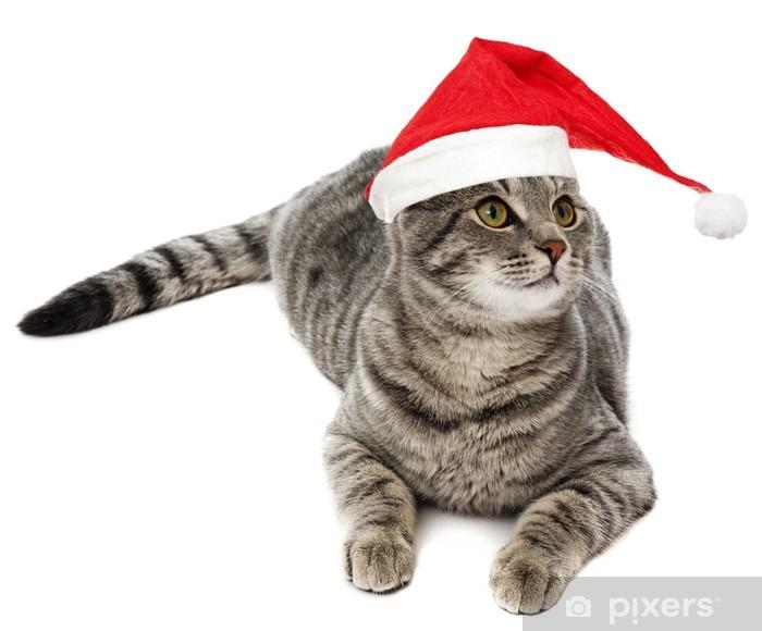 Naklejka Pixerstick Cute cat z Zabawna santa WPR - Ssaki