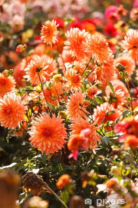 Naklejka Pixerstick Kolorowy kwiat dalia - Pejzaż miejski