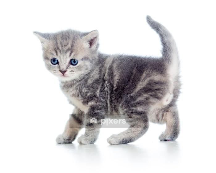 Muursticker Grappig lopen kitten geà ¯ soleerd op wit - Bestemmingen