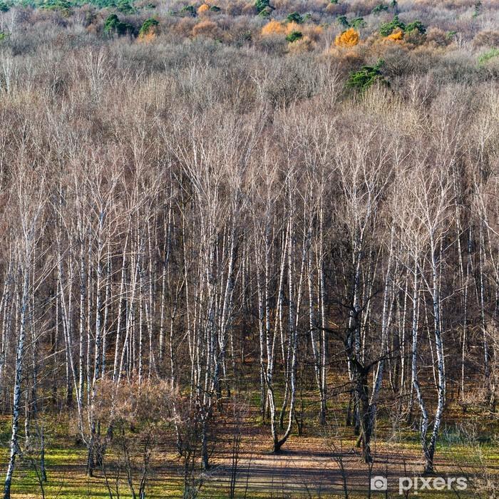 Wald nackt leben im Geschichte: Das