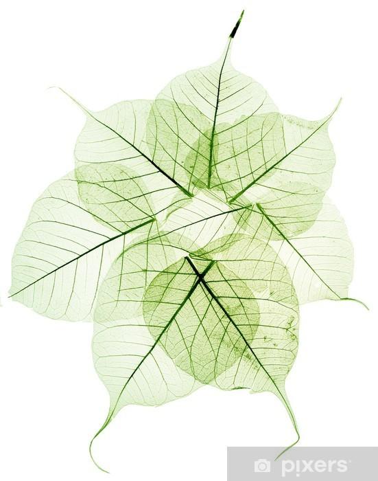 Naklejka Pixerstick Zielone przezroczyste suszonych liści spaść - Pory roku
