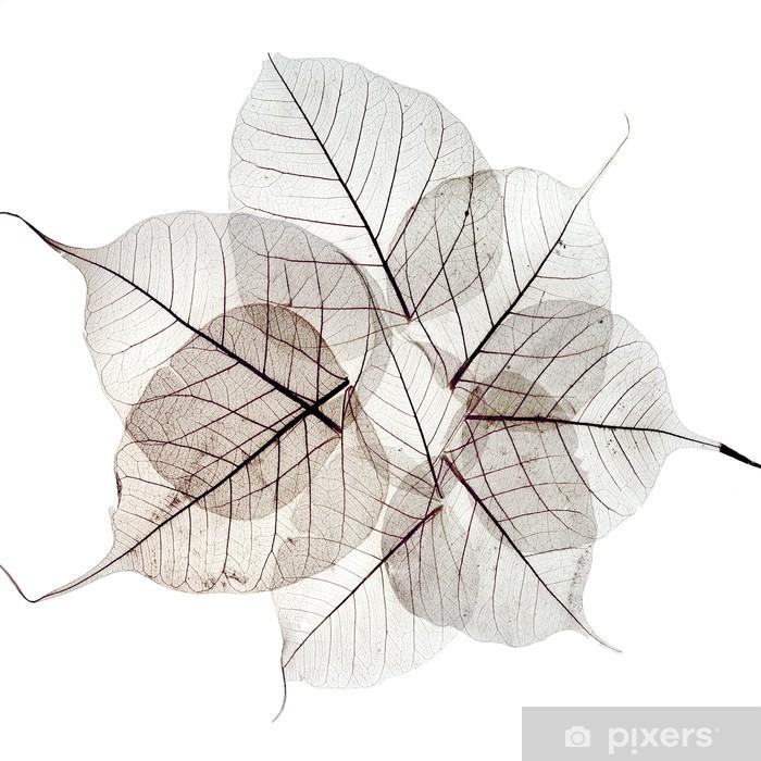 Papier peint vinyle Feuilles d'automne séchées transparentes - Saisons
