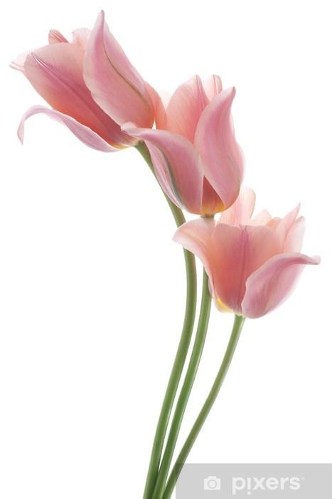 Fototapeta winylowa Tulipan - Kwiaty