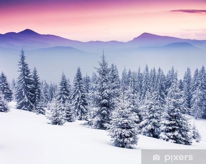 Vinyl Fotobehang Winter - Winter