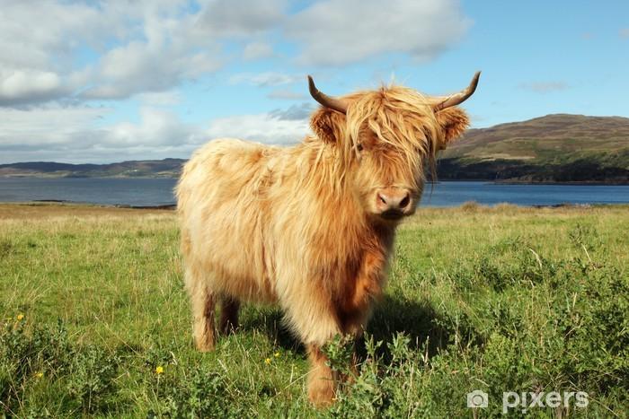 Pixerstick Sticker Close-up van Schotse hoogland koe in het veld - Thema's
