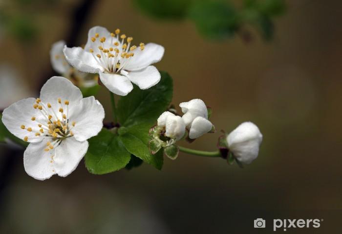 Vinyl-Fototapete Blühender Zweig von einem Obstbaum - Jahreszeiten
