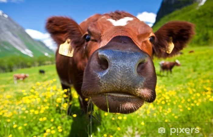 Fototapeta winylowa Norweski krowy - Tematy
