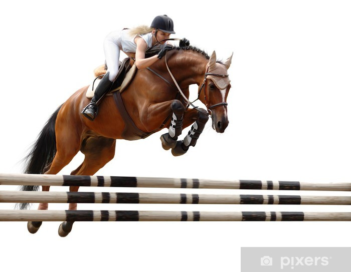 Mural de Parede em Vinil show jumping /stylized by oil painting/ - isolated on white - Desportos Individuais