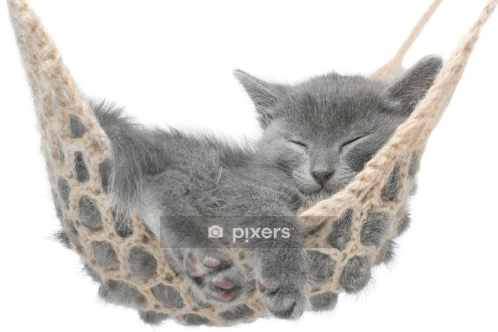 Muursticker Leuk grijs katje dat in hangmat - Vakantie