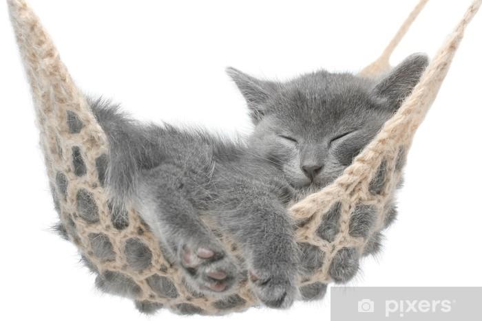 Fototapeta winylowa Cute kitten szary leżącego w hamaku - Wakacje