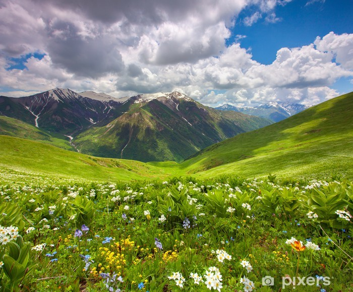 Fields of flowers in the mountains. Georgia, Svaneti. Pixerstick Sticker - Themes