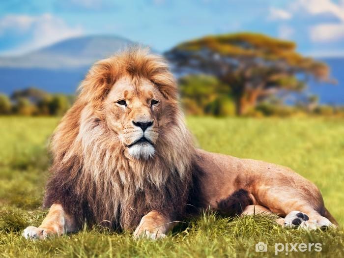 Naklejka Pixerstick Wielki lew leżący na sawannie trawie. Kenia, Afryka - Tematy