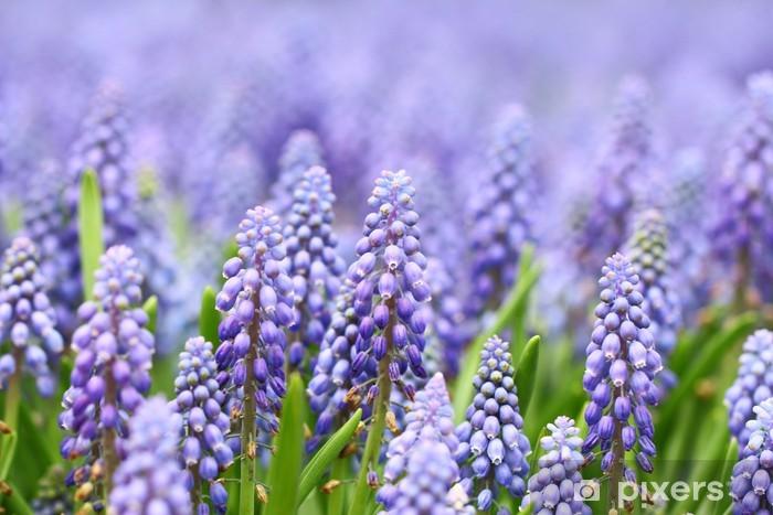 Mural de Parede em Vinil Purple muscari botryoides - Flores