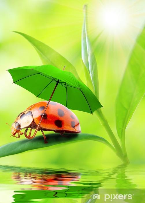 Papier peint vinyle Petites coccinelles avec le parapluie. - Autres Autres
