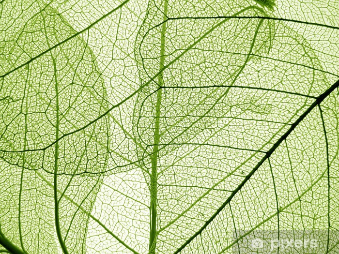Papier Peint Feuille Verte Texture Detail Pixers Nous Vivons