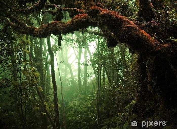 Carta Da Parati Foresta Tropicale : Carta da parati foresta pluviale tropicale u pixers viviamo per