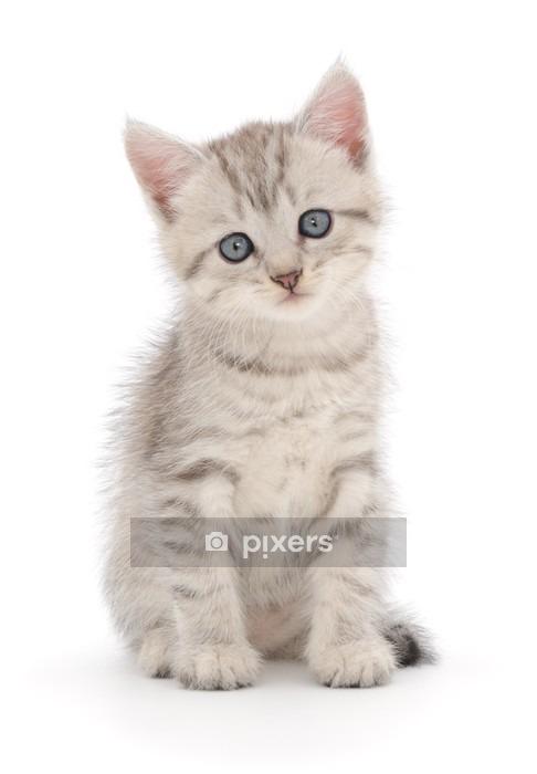 Muursticker Katje op een witte achtergrond - Thema's