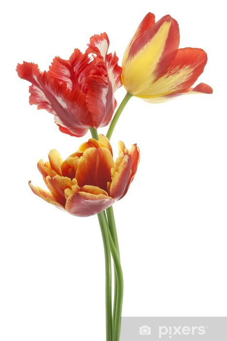 Naklejka Pixerstick Tulipan - Kwiaty