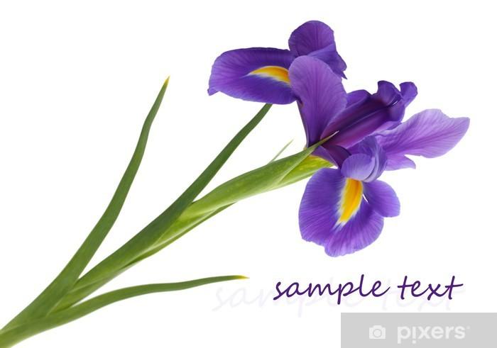 Papier peint vinyle Purple iris fleur, isolé sur blanc - Fleurs