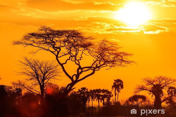 Orange glow of an african sunset Vinyl Wall Mural - Themes