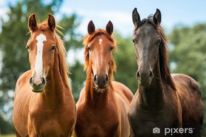 Pixerstick Dekor Grupp av tre unga hästar på bete - Teman
