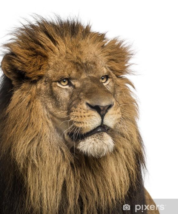 Papier peint vinyle Close-up d'un lion, Panthera Leo, 10 ans, isolé - Mammifères