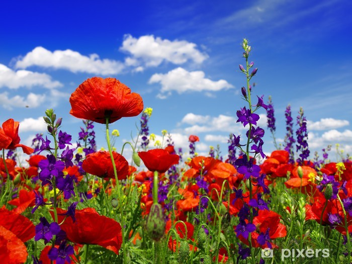 Sticker Pixerstick Fleurs d'été et les nuages - Coquelicots