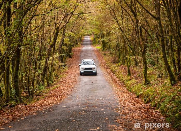 Naklejka Pixerstick Samochód na drodze w lesie - Lasy