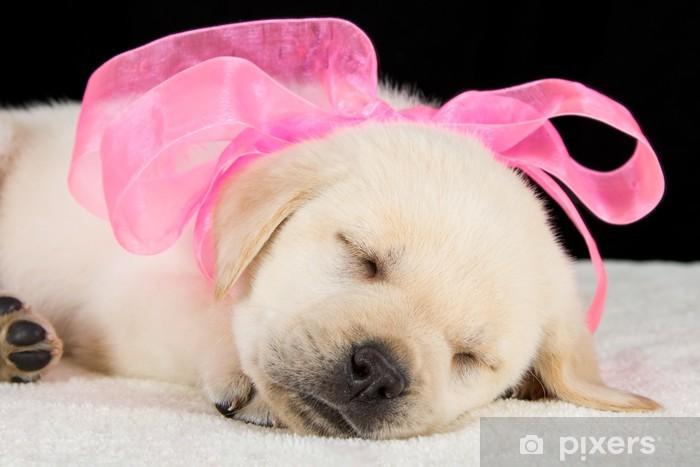Vuole Dormire Nella Cuc Cuc Labrador Querciacb