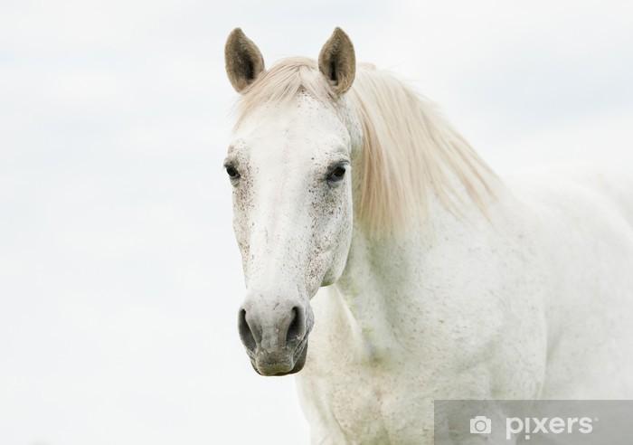4ee3931ca0332 Fototapete Portrait der schönen weißen Pferd • Pixers® - Wir leben ...