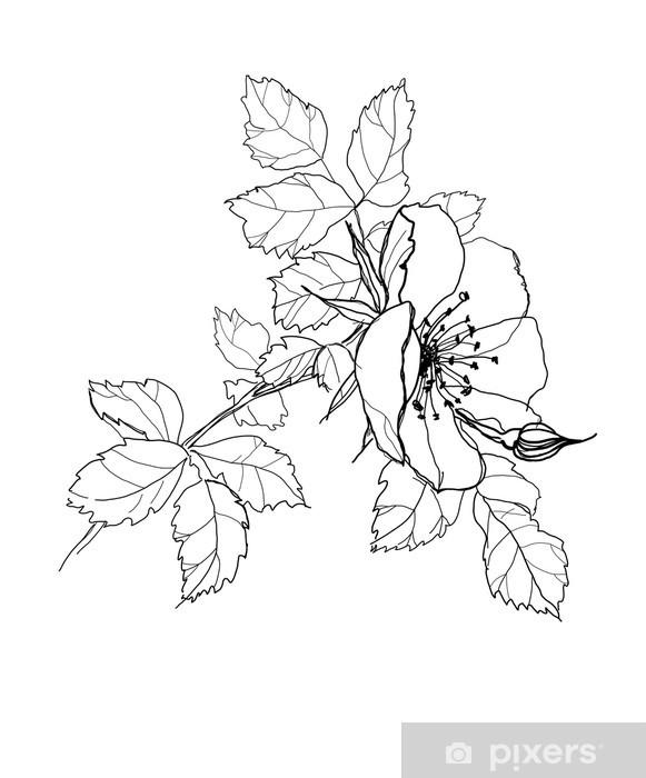 Vinilo Pixerstick Rosa Dibujo A Lápiz De La Flor Pixers Vivimos
