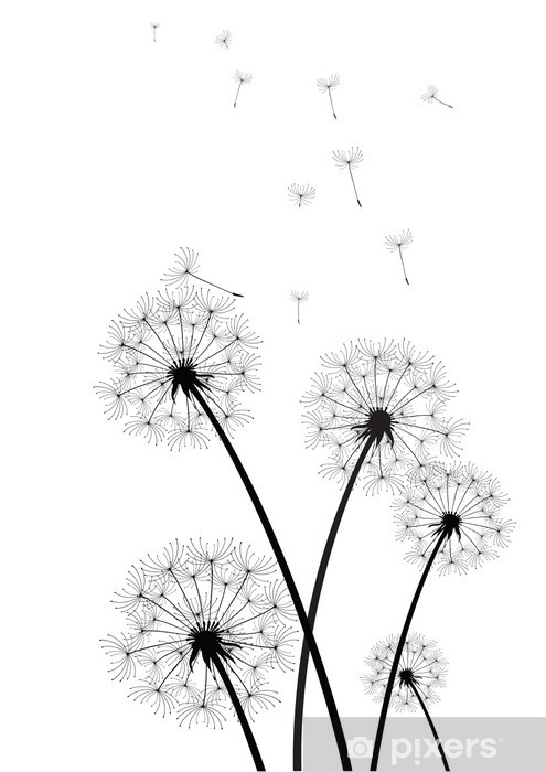 black and white dandelions vector Vinyl Wall Mural - Styles