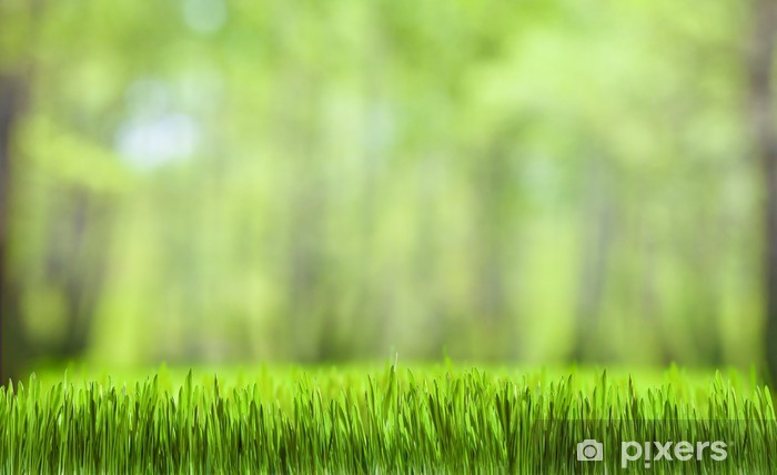 Masaüstü Duvar Kağıdı Yeşil çimen Ve Orman Doğa Arka Plan çıkartması