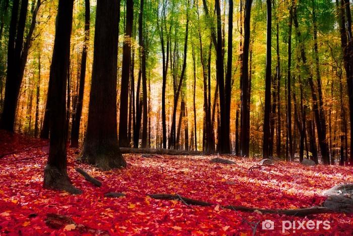 Papier peint vinyle Forêt en automne avec la lumière d'or - Thèmes