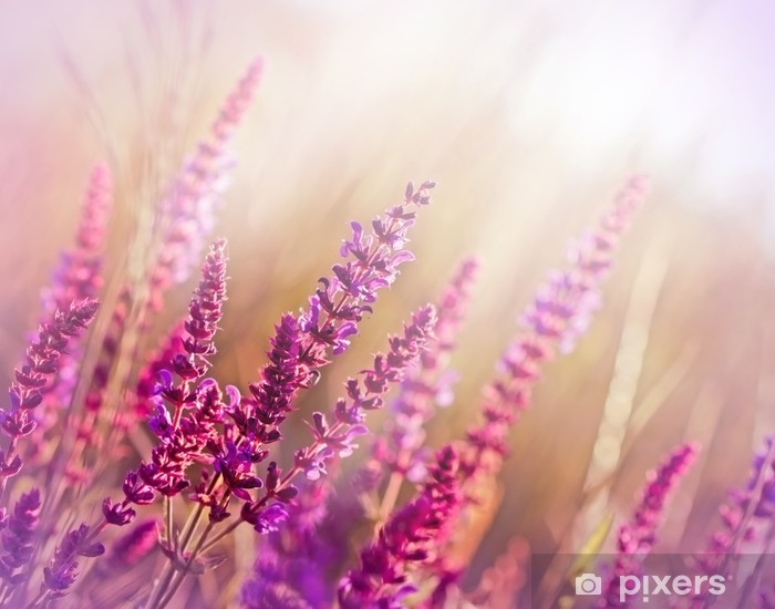 Wild flower (meadow flower) Pixerstick Sticker - Styles