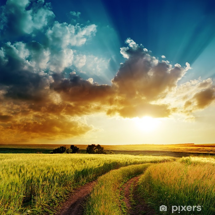 Fototapeta winylowa Dramatyczny zachód słońca nad wiejskiej drodze w zielonym polu - Pory roku