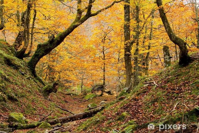 Vinyl Fotobehang Kleine vallei in Montegrande beuken bos in de herfst, Asturias. - Thema's