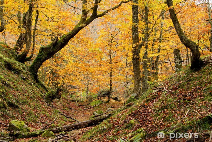 Naklejka Pixerstick Mała dolina w Montegrande las bukowy jesienią, Asturia. - Tematy