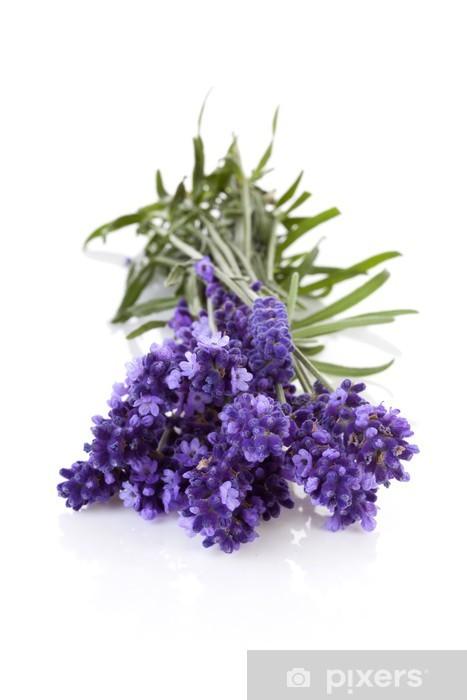 Pixerstick Sticker Takjes lavendel in close-up op witte achtergrond - Bloemen