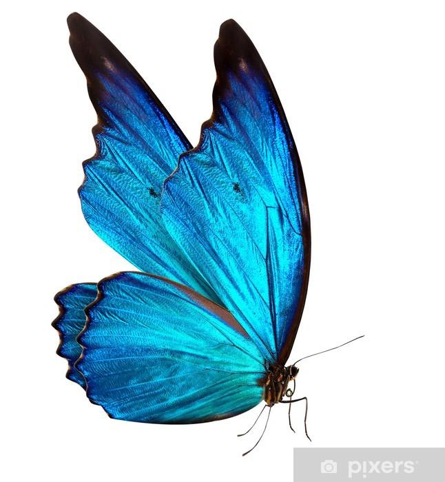 Pixerstick Sticker Vlinder macro achtergrond - Vrijheid