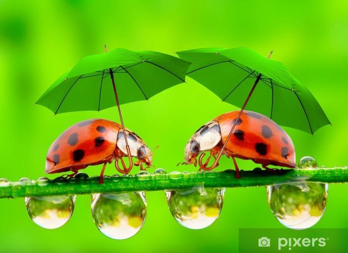 Fototapeta winylowa Małe biedronki z parasolem. - Inne Inne