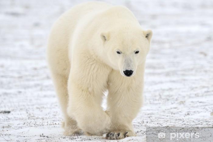 Sticker Pixerstick Ours polaire marche sur la toundra. - Thèmes