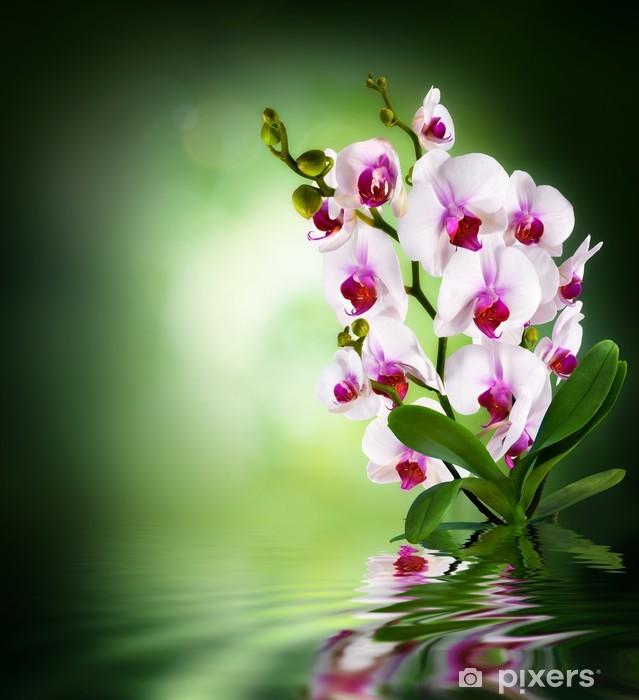 Sticker Pixerstick Orchidées blanches - fond vert foncé - Thèmes