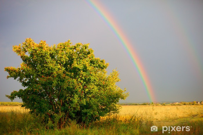 Naklejka Pixerstick Rainbow Łąka - Europa