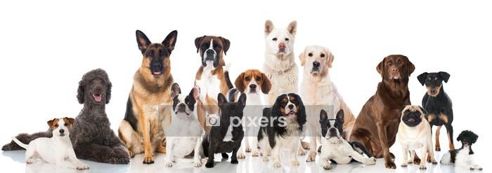 Naklejka na ścianę Różne rasy psów - Ssaki