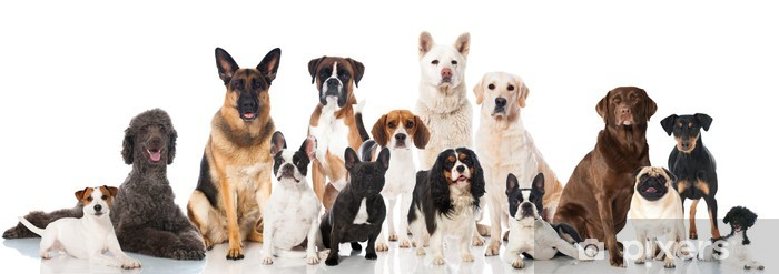Papier peint vinyle Différents chiens de race - Mammifères