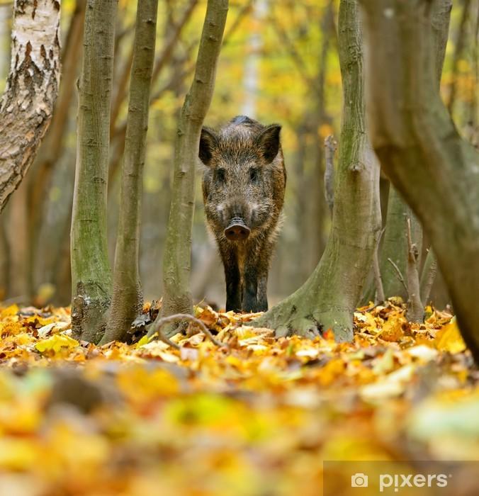 Sticker Pixerstick Sanglier dans la forêt en automne - Mammifères