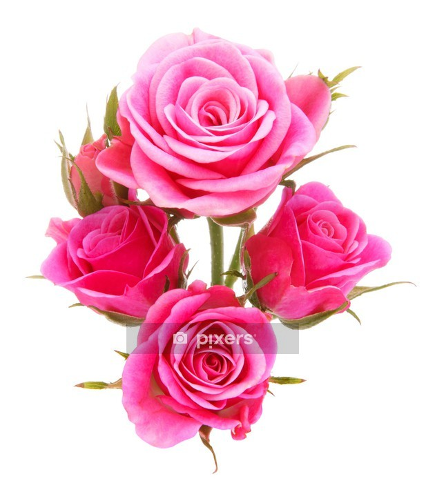 Pink rose flower bouquet isolated on white background cutout Wall Decal - Flowers