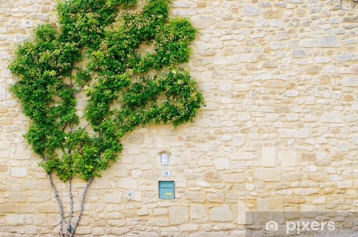 Creeper Vinyl Wall Mural - Home and Garden